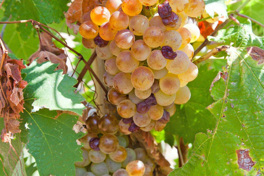 L'équilibre entre le soleil & la fraîcheur des vins du Roussillon
