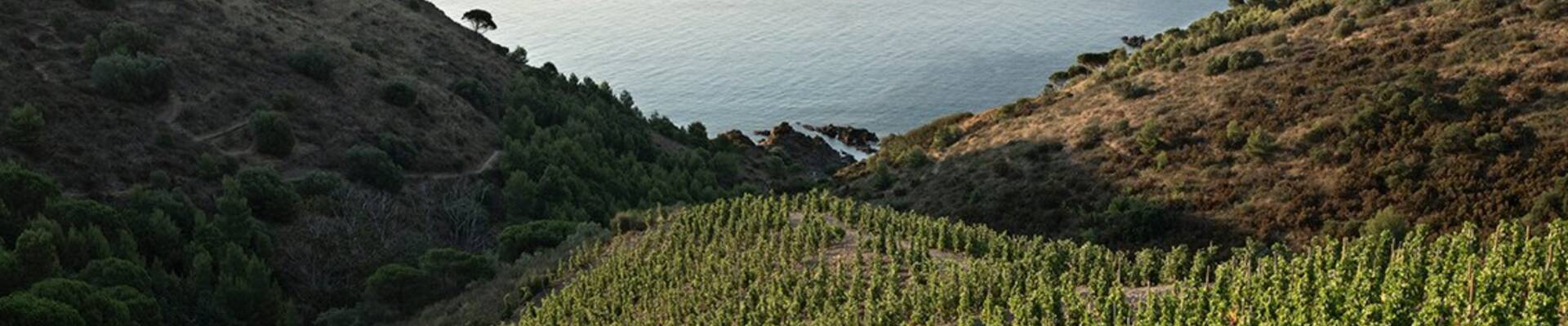 DISCOVER OUR ORGANIC WINES