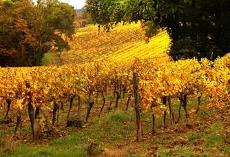 Les vignes du Domaine de Joÿ