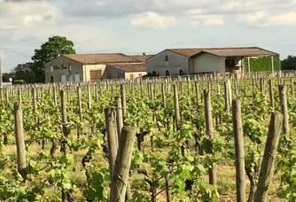 Château Gessan - Le vignoble