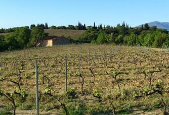 Vignoble du Domaine Vaquer