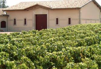 Vue sur les vignes du Clos du Notaire