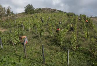 Travail dans les vignes au domaine Pithon Paillé - Copyright Jean-Yves Bardin