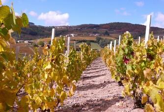 Vignoble du Château de Javernand