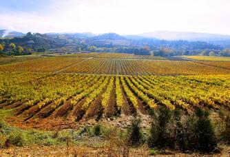 Vue panoramique du vignoble de J.Laurens