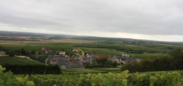 Domaine Roger Champault