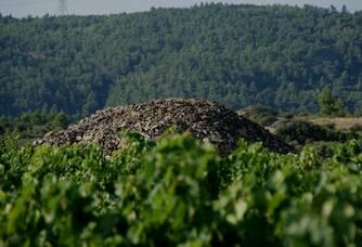 Au milieu des vignes du Domaine Anne Gros & Jean Paul Tollot