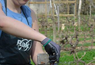 Pauline dans les vignes du Clos de l'Epinay