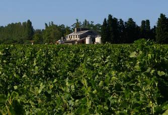 Au coeur des vignes du Domaine de l'Isle Saint Pierre