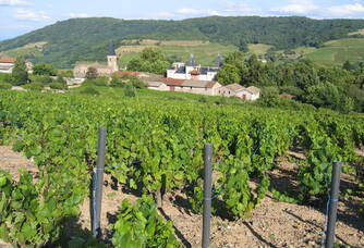 Au coeur des vignes du Château d'Emeringes