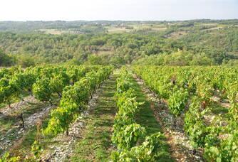 La vue depuis les vignes du domaine des Roques de Cana