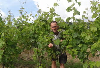 Au coeur des vignes du Moulin de Repassat