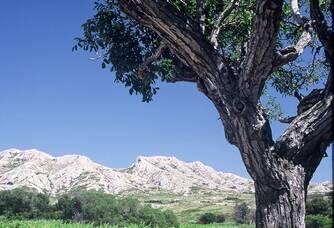 Vue panoramique du Mas de la Dame