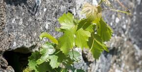 Domaine de Nerleux (Loire) : Visite & Dégustation Vin