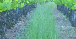 Domaine de Champ-Fleury(Beaujolais) : Visite & Dégustation Vin