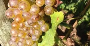 Domaine du Closel(Loire) : Visite & Dégustation Vin