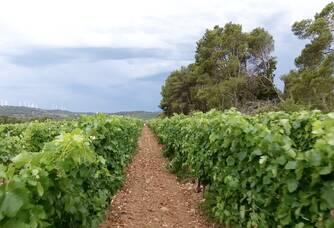 Les vignes du Château la Bastide