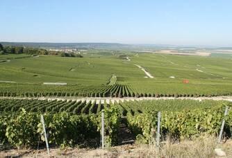 Le vignoble du Champagne Rousseaux-Batteux