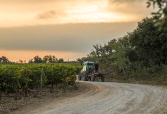 Château Romanin : un vignoble en biodynamie