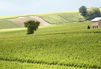 Vue sur le vignoble du Champagne Soutiran