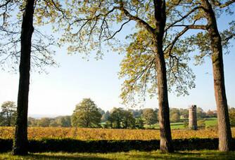 Vue sur le vignoble du Domaine Landron Chartier