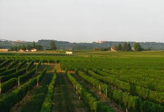 Vue sur les vignes du Château de Bertin