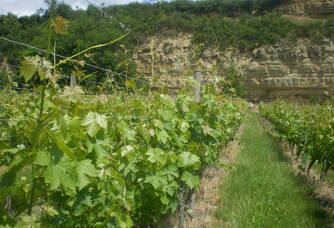 RIESLING AUX CARRIERES ROYALES