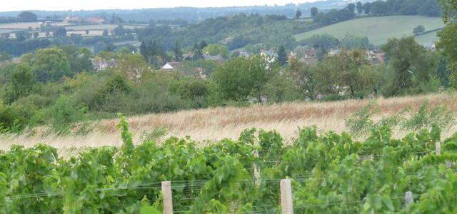 Domaine de vignerias