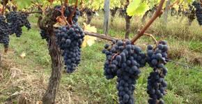 Vignobles Robin(Bordeaux) : Visite & Dégustation Vin