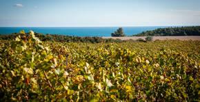 Château de Marmorières(Languedoc) : Visite & Dégustation Vin