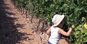 Domaine du Séminaire(Vallée du Rhône) : Visite & Dégustation Vin