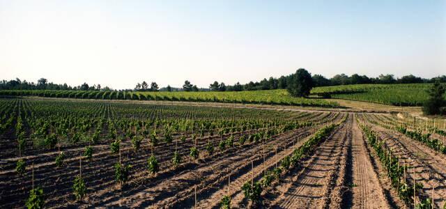 Vignobles du Sourdour