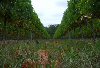 Sol de la Vigne