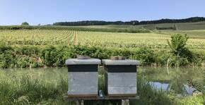 Champagne Robert-Allait - Les ruches du Domaine