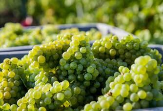 Chardonnay Caisse Vendanges 2013 Naveau