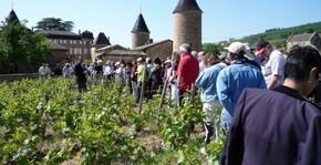 groupe de visiteurs en promenade dans les vignes au pied du château