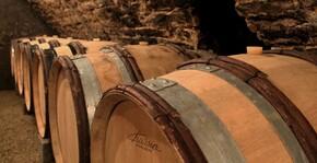 Maison Olivier Chanzy(Bourgogne) : Visite & Dégustation Vin