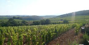 Domaine Galtier(Languedoc) : Visite & Dégustation Vin