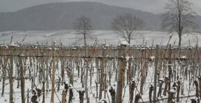 Domaine Laurence et Philippe Greiner(Alsace) : Visite & Dégustation Vin