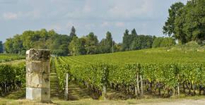 Vignobles Carles - Le vignoble