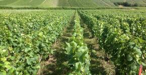 Champagne Robert-Allait - Le vignoble