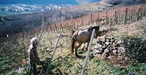 Domaine Martin Schaetzel(Alsace) : Visite & Dégustation Vin