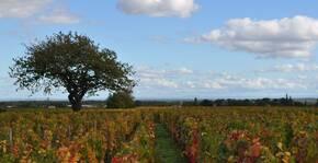 Domaine Trapet-Rochelandet - Vignobles au printemps