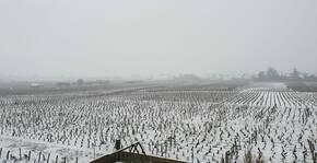 Domaine Trapet-Rochelandet - Vignoble en hiver