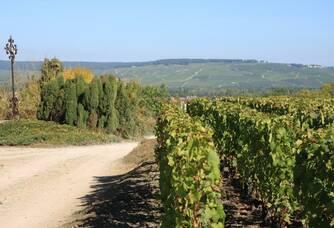 Champagne Charles Mignon - Le vignoble