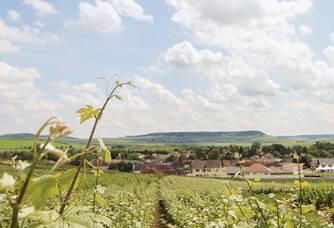 Champagne Charles Mignon - Les vignes