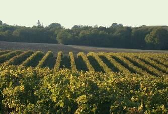 Domaine de Lagajan - Les vignes