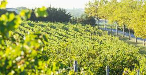 Domaine de la Baume - Le vignoble