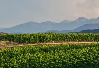 Domaine de Baronarques - Les vignes et les montagnes