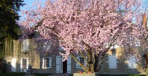 Domaine Hervé de Lavoreille - Un arbre et la maison